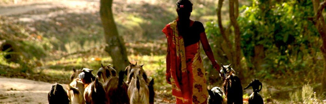 Nepalese goat herder walks along road