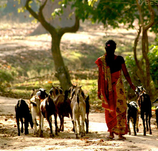Nepalese lady walks along the road with goats